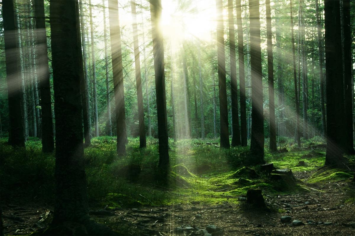 Pour Peter Wohlleben les arbres sont une communauté de plantes soudées